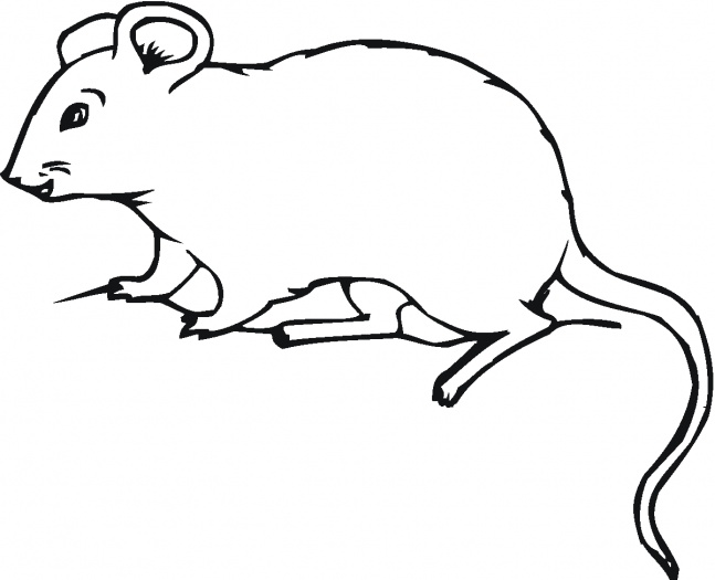 Rat 17 Coloring Page
