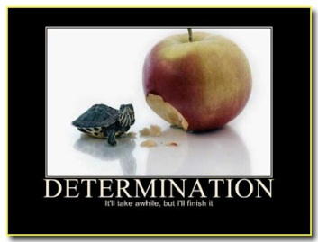 DeterminationTurtleAppleW