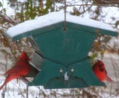 redbirdsdecember2013sized