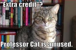extra-credit-cat