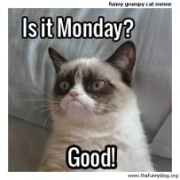 funny-grumpy-cat-meme-monday-good