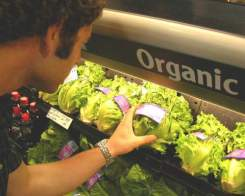 Organic_Food2
